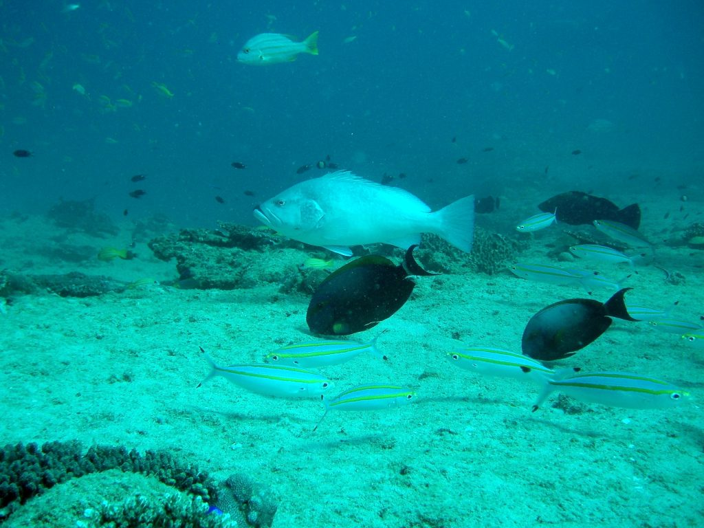 Ningaloo Reef Scene