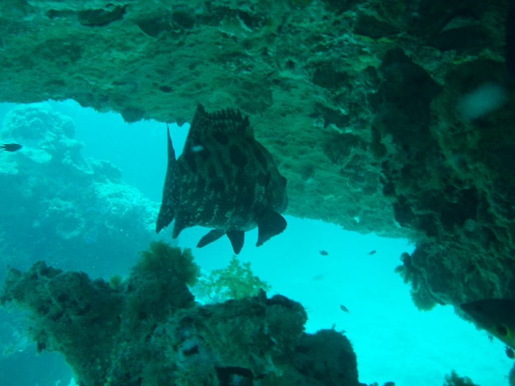 Cod under ledge