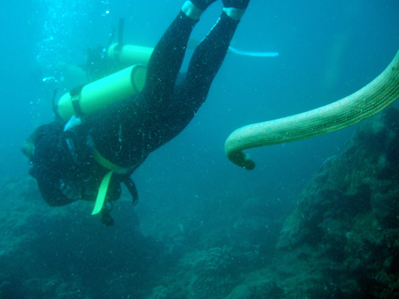 Scuba Dive in Perth Australia - Scuba Diving Community for